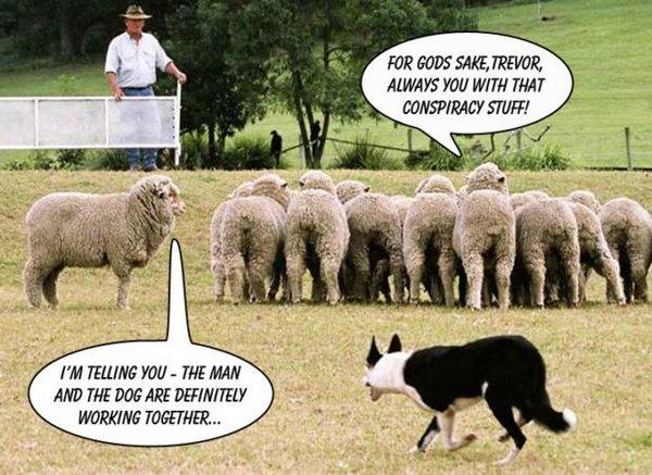 sheep-dog-man_conspiracy[1].jpg